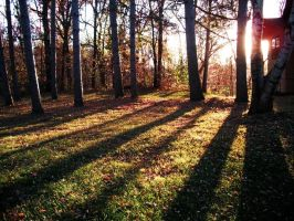 Let the Sunlight In - Fall by Rath-Roiben-Rye