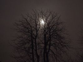 Moon ft. Tree 5 by NeeJaT
