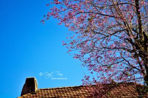 Rooftop Blossoms by cazt1811