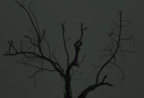BLACK TREE by uncannyNuncertainty
