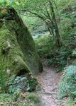 Fairy Forest 16 - Trackway by fuguestock