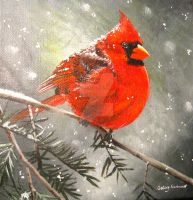 Male Cardinal by ChalkyCanvas