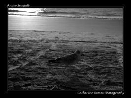 Seagull by photorox33