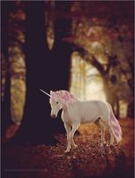 Enchanted Forest by Vhitany