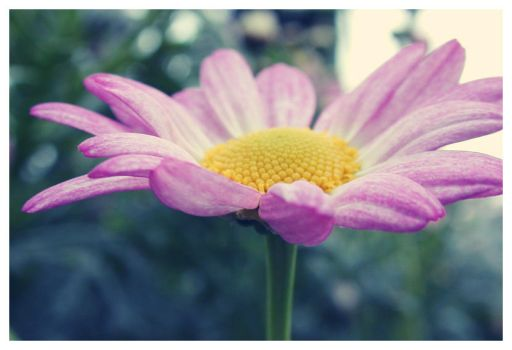 Pink Petals by SweetMysterium