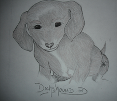 .:Dachshound pup:. by DreamDrifter91
