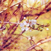 .: sweet spring :. by all17