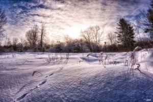 Winter in Lanark County, Ontario 15 by Nini1965