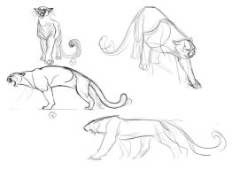 Image Result For Free Printable Cougar