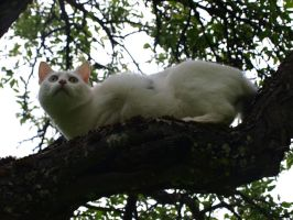 White Cat in a Tree 07 by K1ku-Stock