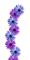 FLOWER VINE PNG by TheArtist100