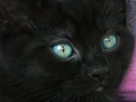 Black Kitten. by LordMcWhiskers