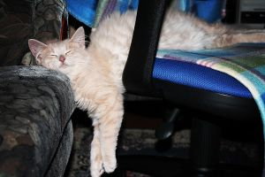 cat sleeping on two chairs by Luba-Lubov-13