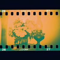 Tangy Vintage by lomocotion