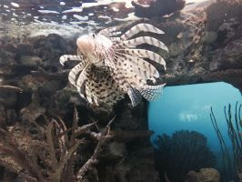 Lion Fish by Wolfchick36