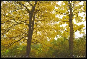 Autumnal Trees in the Park by Miarath