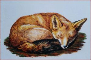 red fox by Adniv