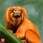 Golden lion tamarin speedpaint by GNAHZ