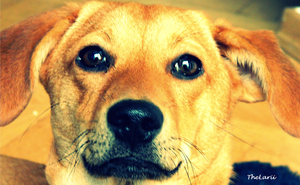 Marple the Whuffdog by TheLarii