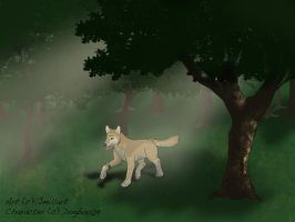 A walk in the woods by jmillart