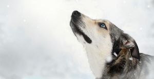 Mya watching snow flakes by Photolover68
