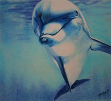 Dolphin by nogie40