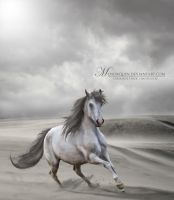 Desert Runner by Menorquin