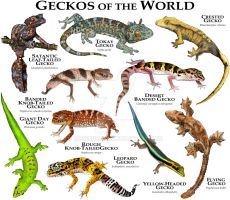 Geckos of the World by rogerdhall