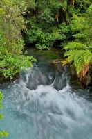 Tarawera - downstream by anjules