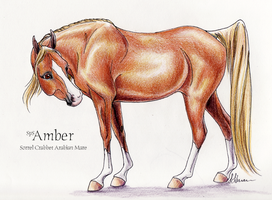 SpS Amber by lunatteo