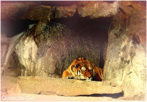 Tiger by quileute-girl