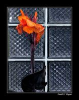 Flamenco by David-A-Wagner