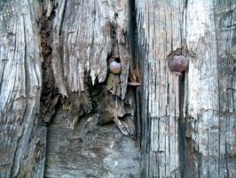 Stock Texture - Broken wood and nails by rockgem