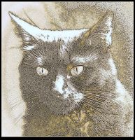 Sunlit Black Cat Study by surrealistic-gloom