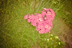 Red heart shaped flower by lalylaura