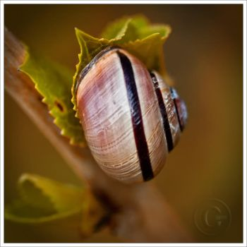 snail shell by neoloonatic