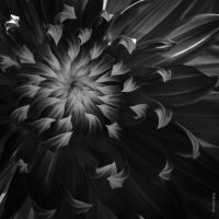 Abstract Bloom by tholang