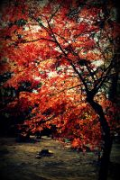 Red autumn in Iga Ueno by Shreever