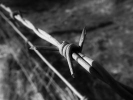 black and white barbed wire by fenton052