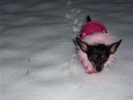 daisy in the snow 03 by Junko-Ishi