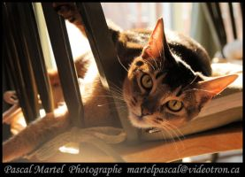 charlie in the sun by whipmaster2007
