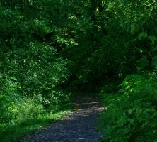 Forest Path Stock by amygdaladesign