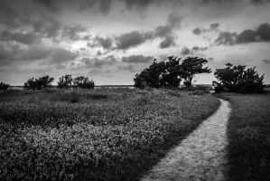 Path by TadLittle