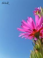 candy pink by ad-shor
