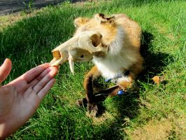 First Softmount, First Skullfox. by ailie101