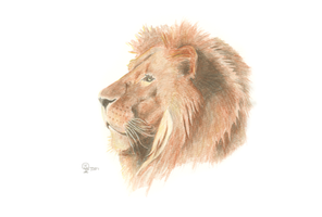 Lion by mtbird
