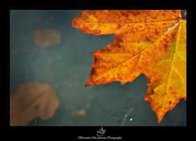 ...fall2... by canismaioris