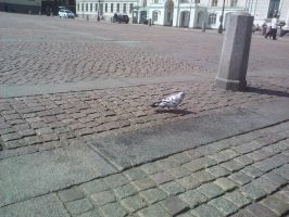 Black and white checkered dove by ProjektGoteborg