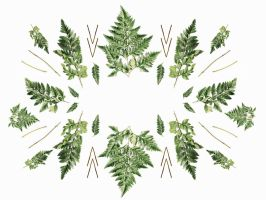 fern pattern colour by cocorie