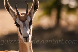 Duck-face Spring buck by Guizzmoh